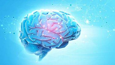 脳には変わったクセがある